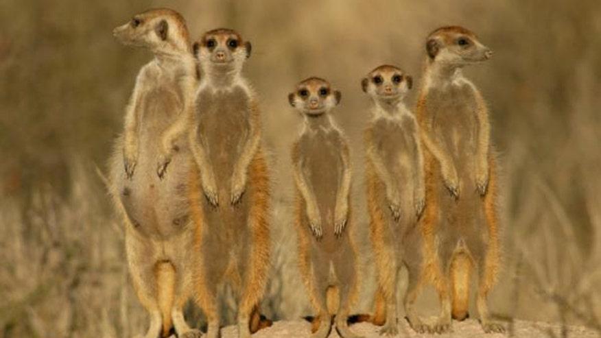 safari_Kalahari.jpg