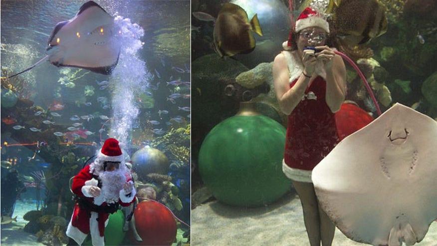 underwater_santa5.jpg