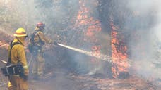 A man has been arrested on suspicion of arson in an out-of-control Northern California wildfire that has driven nearly , people from their homes as it continues to grow, authorities said Thursday.