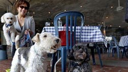 Dogs can now hang out with their owners at many Georgia restaurants without fear of getting bitten by state health inspectors.