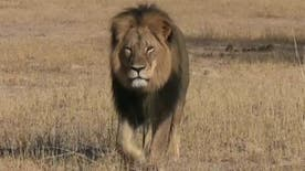 Walter Palmer, the Minnesota dentist who has gone into hiding amid an international outcry over his killing of a beloved African lion, also wanted to shoot a large elephant on the ill-fated hunting trip, his guide has told a British newspaper.