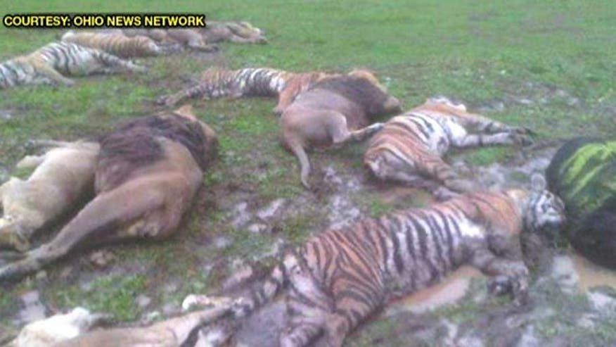killed 49 of the 56 animals that were released from a wild-animal ...
