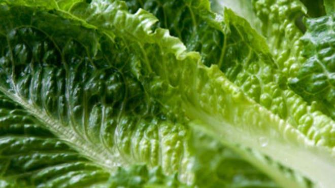 0_21_Romaine_lettuce_450