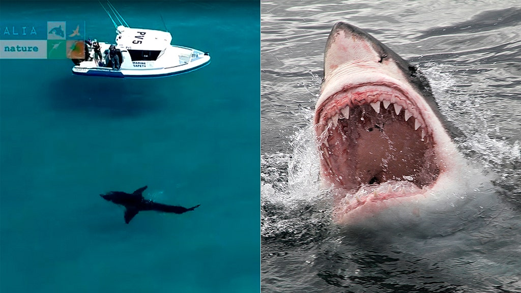 Monster shark caught on video circling boat near popular tourist beach