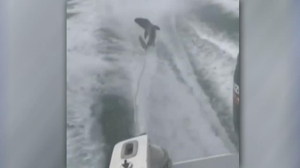 Florida boaters seen in viral shark dragging video face felony counts