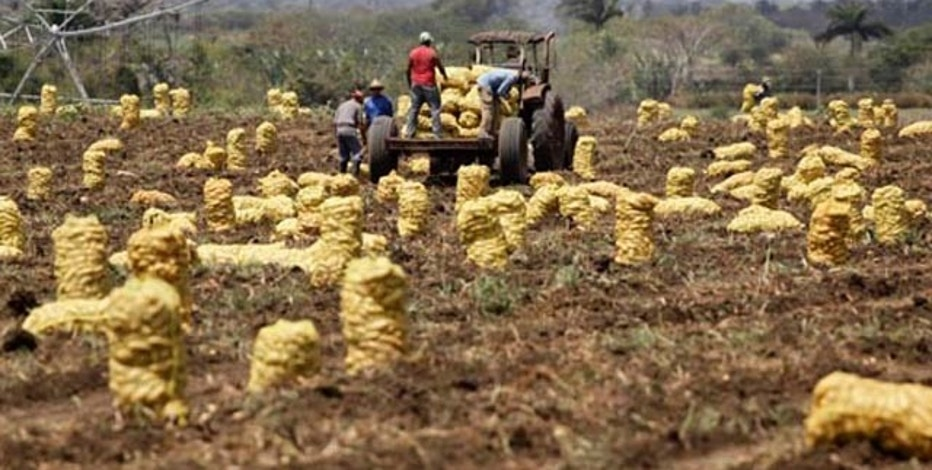 Workers load sacks of potatoes on a cart pulled by a tractor in a field on the outskirts of Santa Clara, province of Villaclara in central Cuba, around 280 kilometres (175 miles) from Havana, April 6, 2010. REUTERS/Desmond Boylan (CUBA - Tags: SOCIETY FOOD BUSINESS)