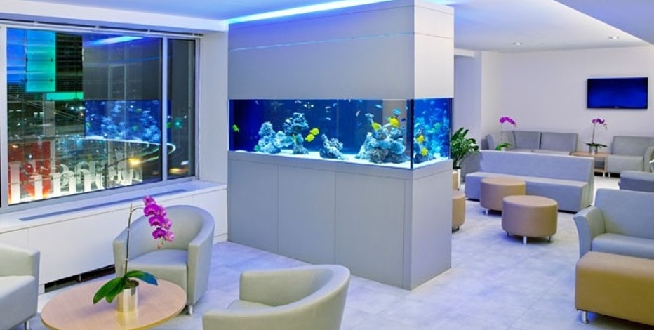 Ornamental fish business plan - Tropical Fish and Aquarium