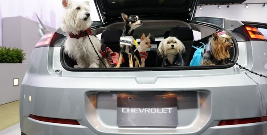 A group of dogs check out the Chevrolet display from the back of a Chevrolet Volt during a Pet Day event at the New York International Auto Show, Wednesday, April 11, 2012.