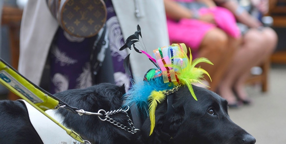 A guide dog for the blind wears a hat as it arrives with its owner on Ladies' Day at the Royal Ascot horse racing festival at Ascot, southern England June 20, 2013.  REUTERS/Toby Melville    (BRITAIN - Tags: ENTERTAINMENT SPORT CYCLING HORSE RACING SOCIETY)