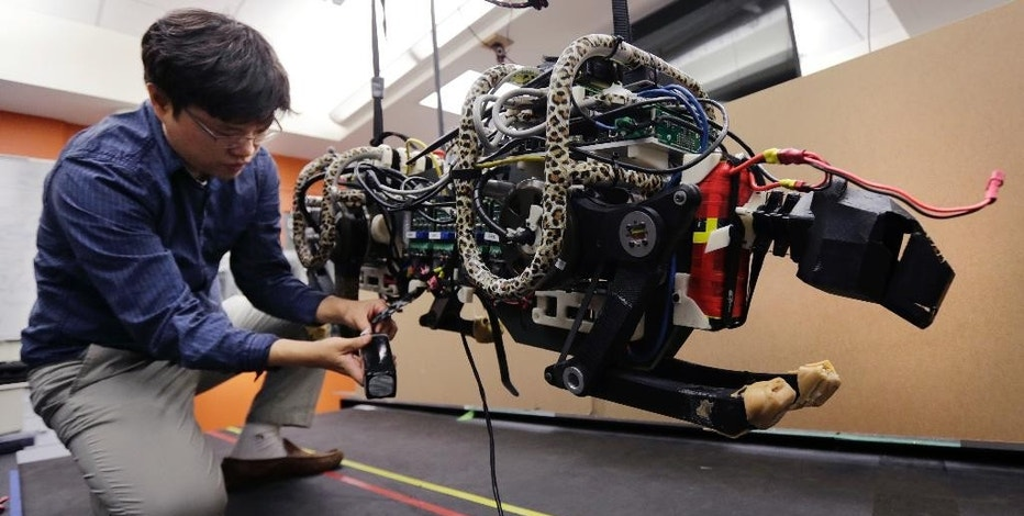 In this Sept. 30, 2014 photo, researcher Hae Won Park plugs the batteries into a robotic cheetah at the Massachusetts Institute of Technology in Cambridge, Mass.  MIT scientists said the robot, modeled after the fastest land animal, may have real-world applications, including for prosthetic legs. (AP Photo/Charles Krupa)