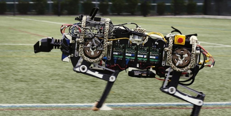 In this Oct. 24, 2014 photo, a robotic cheetah runs on an athletic field at the Massachusetts Institute of Technology in Cambridge, Mass.  MIT scientists said the robot, modeled after the fastest land animal, may have real-world applications, including for prosthetic legs. (AP Photo/Charles Krupa)