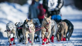 4 Teamwork Lessons from The Iditarod