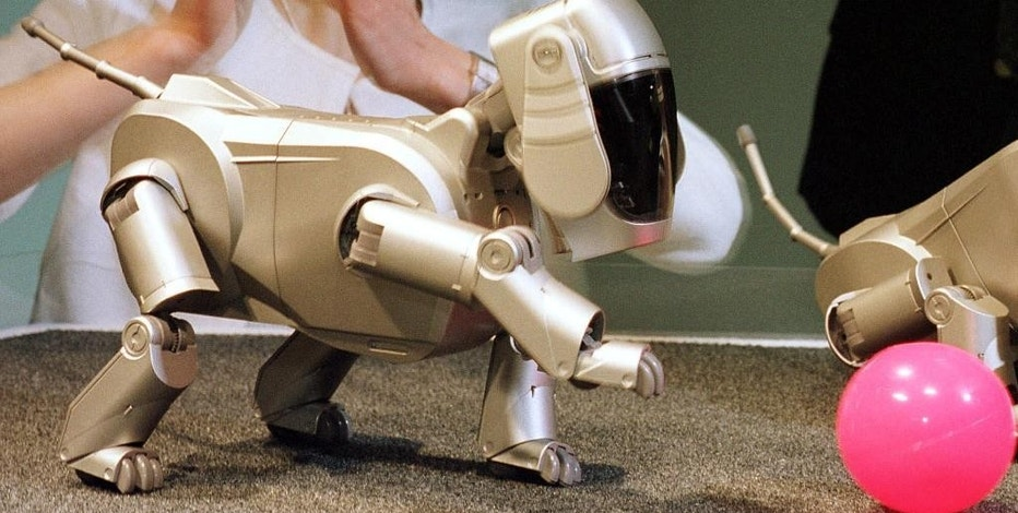 """FILE - In this May 11, 1999 file photo, Sony employee Yuko Nakatani praises """"AIBO,"""" the electronic giant's new pet dog robot, chasing at a pink ball during its press preview in Tokyo. The Aibo entertainment robot, on which Sony pulled the plug in 2006 under a plan to cut costs, was a perfect example of the """"synergy"""" that has been an elusive goal for decades, creatively bringing together two areas of Sony's expertise: entertainment and gadgetry. (AP Photo/Koji Sasahara, File)"""