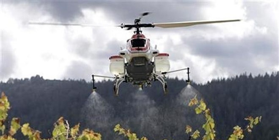 In this Oct. 15, 2014, file photo, a drone called the RMAX, a remotely piloted helicopter, sprays water over grapevines during a demonstration of it's aerial application capabilities at the University of California, Davis' Oakville Station test vineyard in Oakville, Calif.