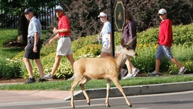 Oh, Deer! The 10 Worst States for Deer Crashes