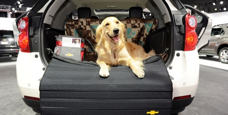 Hannah, a Golden Retriever, checks out the Chevrolet display from the back of a Chevrolet Equinox during a Pet Day event at the New York International Auto Show, Wednesday, April 11, 2012.