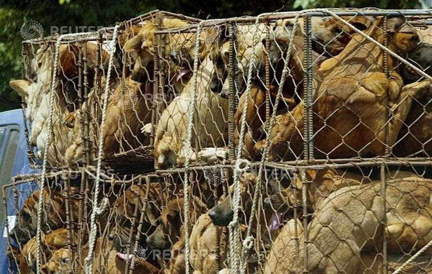 Dogs waiting to be sold as food are in kept in a cage on a truck in Songnam, about 50km (30 miles) south of Seoul.