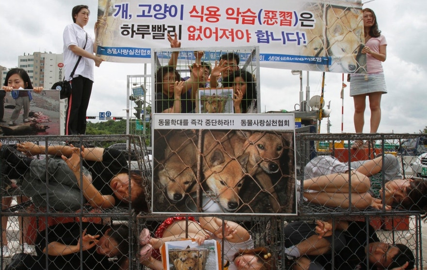 Animal rights activists in cages protest against the eating of dog and cat meat in Seongnam, near Seoul.