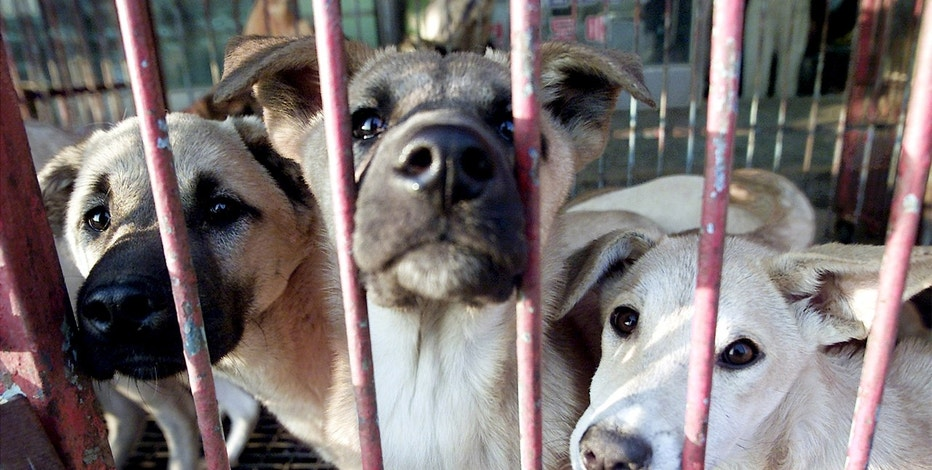 Dogs are in kept in a cage waiting to be sold at a dog meat shop in Songnam, about 50km (30 miles) south of Seoul.