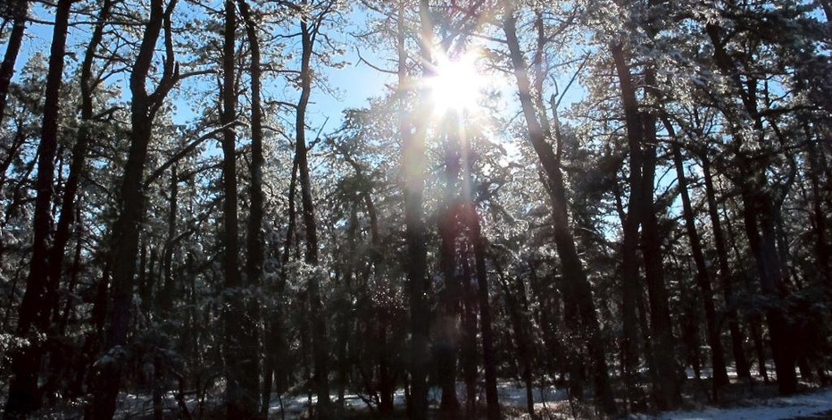 FILE - In this Dec. 11, 2013, file photo, the sun shines through snow-covered pine trees in the New Jersey Pinelands in Manchester, N.J. A hotly contested plan to run a natural gas pipeline through New Jersey's federally protected Pinelands preserve is getting a do-over. A public hearing on the proposal by South Jersey Gas to build the pipeline will be held Tuesday, Jan. 24, 2017, in Pemberton. (AP Photo/Wayne Parry, File)
