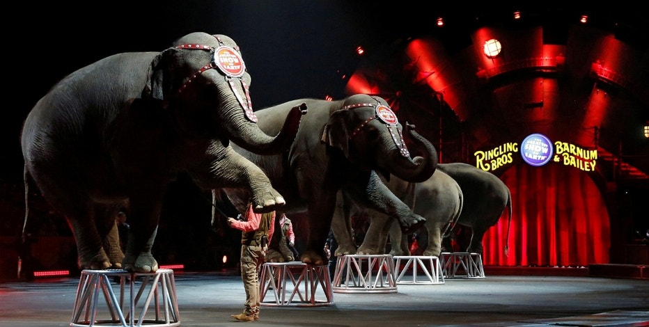 Ringling Bros and Barnum & Bailey Circus' performing elephants appear in their last show in Wilkes-Barre, Pennsylvania, U.S., May 1, 2016.