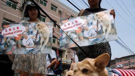 China's dog meat festival opened this week to protests...and profits