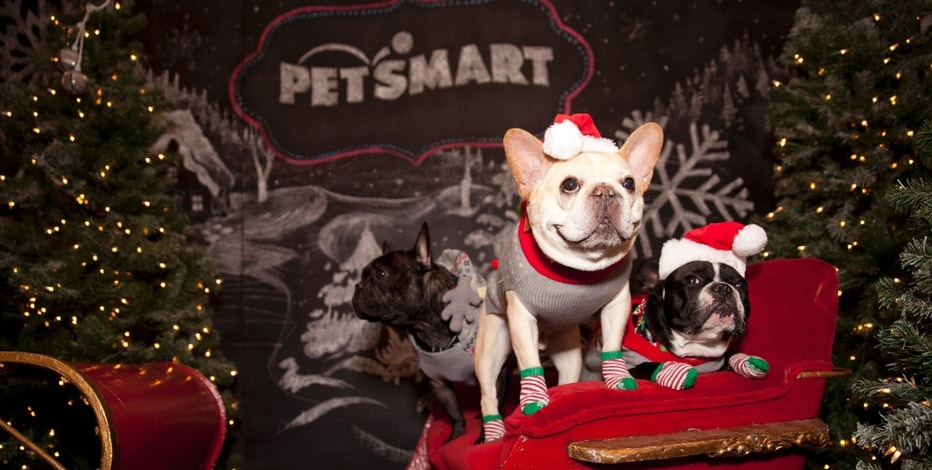 Behind the Scenes: PetSmart Holiday Collection