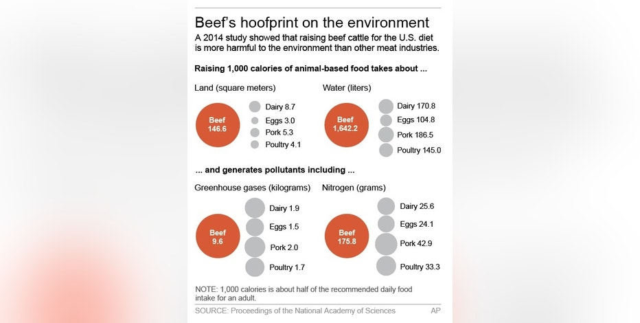 the environmental impact of eating beef The endless cascade of nutritional information—about localism, vegetarianism, veganism, organic food, the environmental impact of eating meat, poultry, or fish, and more—makes the simple goal of a healthy, sustainable diet seem hopelessly complex.
