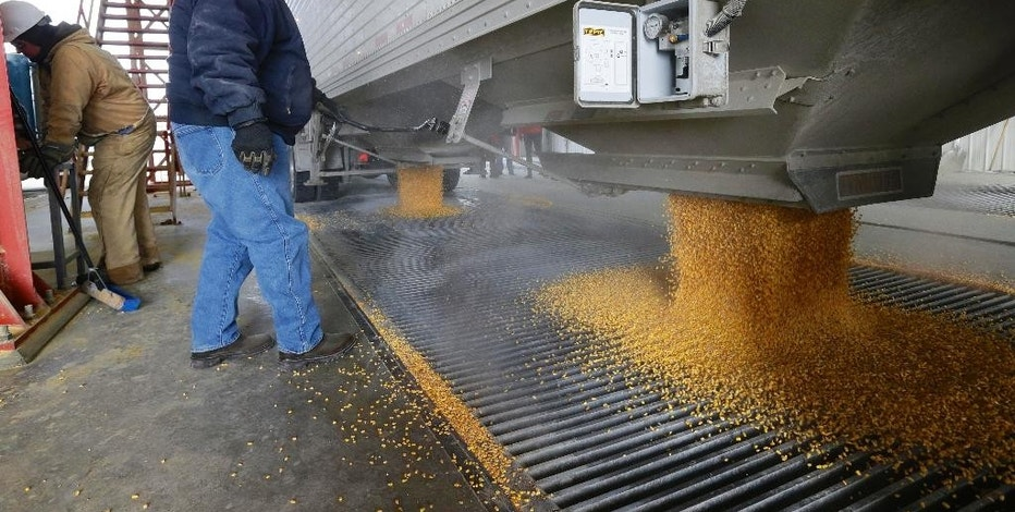 In this image from Jan. 6, 2015, corn is delivered to the Green Plains ethanol plant in Shenandoah, Iowa. Roughly 100 trucks a day filled with corn flow into the ethanol plant in southwest Iowa even as crude oil prices continue to collapse. Oil prices may have dipped below $50 a barrel for the first time since April 2009, but ethanol plants across the nation continue to operate at a brisk pace in order to satisfy a domestic and export demand that hasn't weakened. (AP Photo/Nati Harnik)