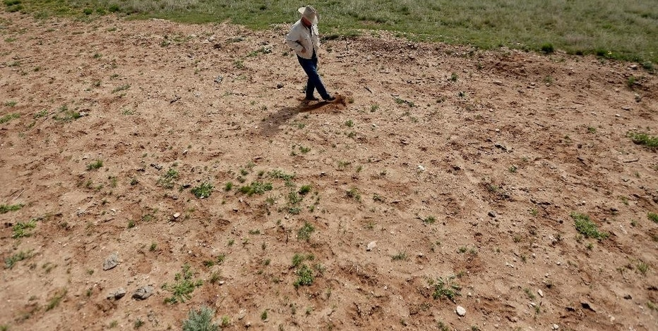 In this April 24, 2015 photo, Carl Johnson examines a pasture near Crossroads, N.M., where an oilfield wastewater spill killed vegetation. Five years after a broken pipeline soaked the ground with up to 420,000 gallons of brine, much of the land is still barren. The New Mexico Salt Water Disposal Co. acknowledged responsibility. No fines were levied because the leak was accidental. (AP Photo/Charlie Riedel)