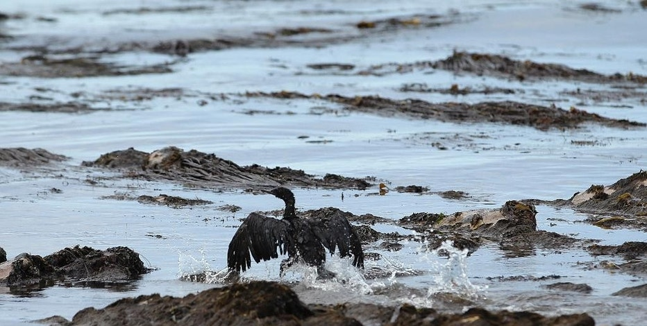 FILE - In this May 21, 2015 file photo, a bird covered in oil flaps its wings at Refugio State Beach, north of Goleta, Calif. A U.S. Senate committee is holding a field hearing on pipeline safety on Friday following a recent surge in accidents, including oil spills that fouled a Montana river and a scenic stretch of Southern California coastline. (AP Photo/Jae C. Hong, File)
