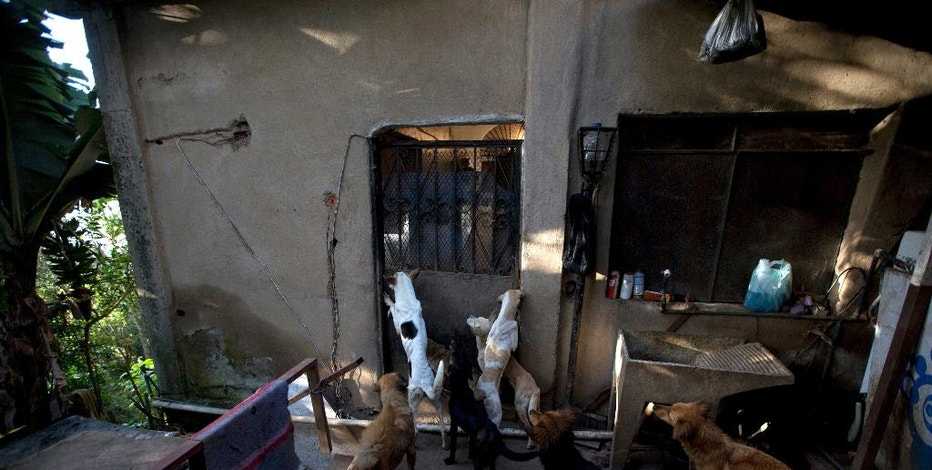 In this July 23, 2016 photo, abandoned dogs gather for feeding time at the private shelter Funasissi, in the working-class Caracas neighborhood of El Junquito, Venezuela. No figures are available, but activists and veterinarians say they are seeing a growing number of dogs and cats abandoned at Venezuela's parks, shelters, and private clinics. (AP Photo/Fernando Llano)