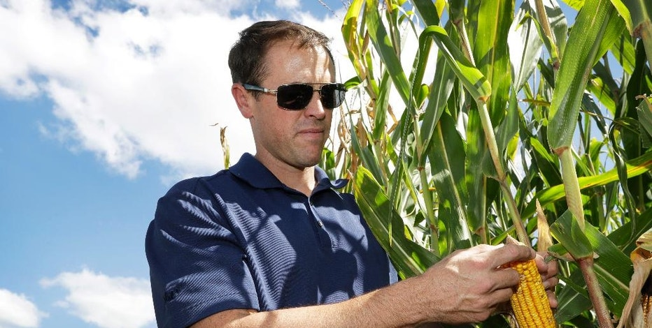 Grant Kimberley checks corn plants on his farm, Friday, Sept. 2, 2016, near Maxwell, Iowa. The men and women who grew what's expected to be the biggest corn crop the United States has ever seen won't benefit from the milestone. Prices are so low that for the third consecutive year, most corn farmers will spend more than they earn. It's a similar story for soybean producers. (AP Photo/Charlie Neibergall)