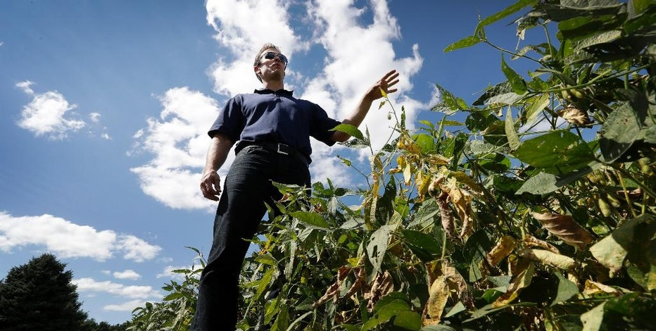 Grant Kimberley speaks about his farm operation, Friday, Sept. 2, 2016, near Maxwell, Iowa. The men and women who grew what's expected to be the biggest corn crop the United States has ever seen won't benefit from the milestone. Prices are so low that for the third consecutive year, most corn farmers will spend more than they earn. It's a similar story for soybean producers. (AP Photo/Charlie Neibergall)