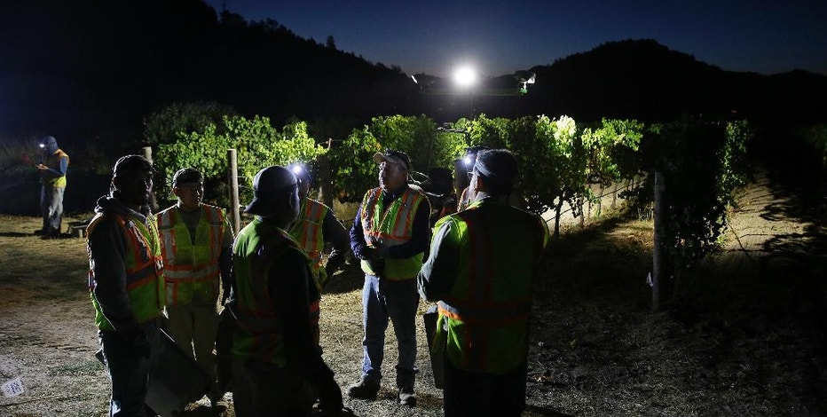 Under a crescent moon workers get instructions on the next block of grapes to pick during harvest at the Quintessa winery Wednesday, Sept. 28, 2016, in Rutherford, Calif. Harvest began at the Napa Valley winery on September 8 and will continue through October. Winemakers expect a fantastic vintage. (AP Photo/Eric Risberg)
