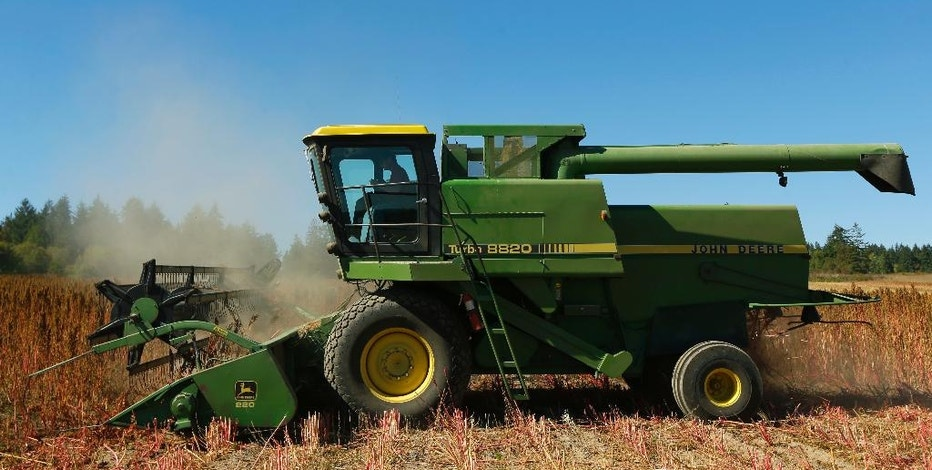 In this Sept. 13, 2016 photo, farmer Sam McCullough uses his combine to harvest quinoa near Sequim, Wash. Quinoa, a trendy South American grain, barely has a foothold in American agriculture, but a handful of farmers and university researchers are working toward changing that. (AP Photo/Ted S. Warren)