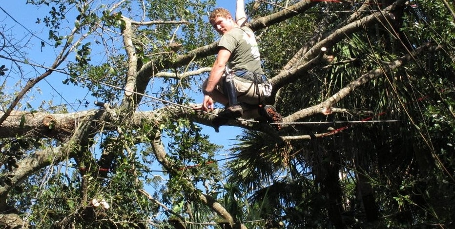 Geno Sperotto removes broken tree limbs from a zip line that runs over alligator pits during Hurricane Matthew cleanup at the St. Augustine Alligator Farm, in St. Augustine, Fla., Sunday, Oct. 9, 2016. All in all, the zoo, one of Florida's oldest tourist attractions and the only place in the world that displays every species of crocodilian, fared well during the storm, but fears of what could have been were certainly on people's minds.  (AP Photo/Brendan Farrington)