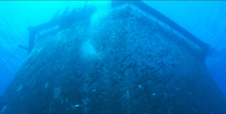 This Sept. 17, 2015, image made from video provided by NOAA Fisheries, shows a fish farm off the shore of Hawaii's Big Island near Kona. The National Oceanic and Atmospheric Administration is creating a plan for managing commercial fish farms, known as aquaculture, in federal waters around the Pacific - a program similar to one recently implemented by NOAA in the Gulf of Mexico.  The farms in the Gulf and the Pacific would be the only aquaculture operations in U.S. federal waters. (Paul B. Hillman/NOAA Fisheries via AP)