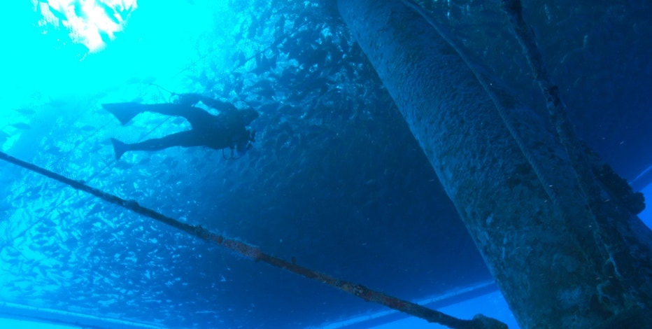 In this Sept. 17, 2015, image made from video provided by NOAA Fisheries, a diver swims amongst a fish farm off the shore of Hawaii's Big Island near Kona. The National Oceanic and Atmospheric Administration is creating a plan for managing commercial fish farms, known as aquaculture, in federal waters around the Pacific - a program similar to one recently implemented by NOAA in the Gulf of Mexico. The farms in the Gulf and the Pacific would be the only aquaculture operations in U.S. federal waters. (Paul B. Hillman/NOAA Fisheries via AP)