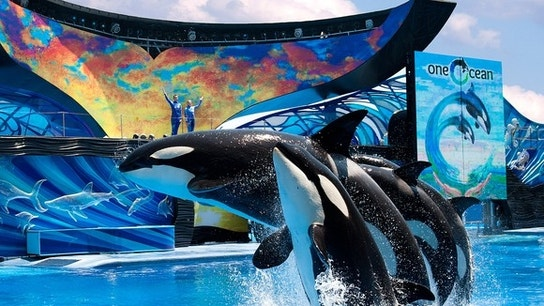 Why SeaWorld Entertainment, Micron Technology, and Under Armour Jumped Today