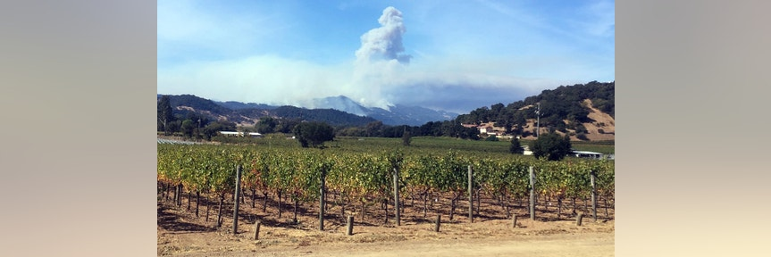 Unforgiving wildfires affect vineyard workers and owners