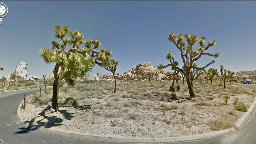In this undated Street View image provided by Google is Joshua Tree National Park in California. The Google Street View service that has brought us Earth as we might not be able to afford to see it, as well criticism that some scenes along its 5 million miles of the globes roadways invade privacy, this month has turned its 360-degree cameras on road trips through five national parks in California. (AP Photo/Google)