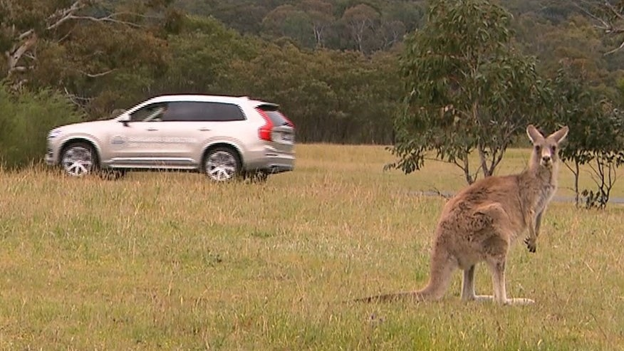 Volvo Cars begins first ever Australian tests for kangaroo safety research