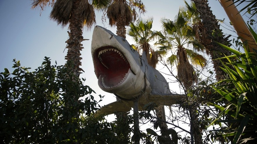 "In this Wednesday, Nov. 11, 2015 photo, one of the giant mechanical sharks that starred in the movie ""Jaws"" is seen at Aadlen Brothers Auto Wrecking, also known as U Pick Parts, in the Sun Valley section of Los Angeles. It's not just a junkyard or even a really big junkyard, but a living, breathing monument to Los Angeles pop culture. But the family business is closing on New Year's Eve, and everything must go by then, the cars, the shark, the arches, even the giant car-crushing machine. (AP Photo/Jae C. Hong)"