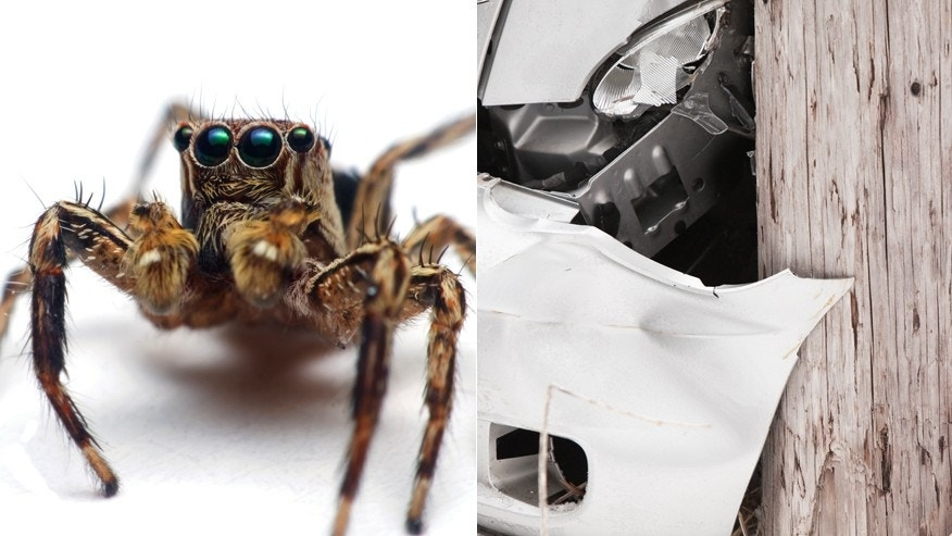 Not the actual spider or car
