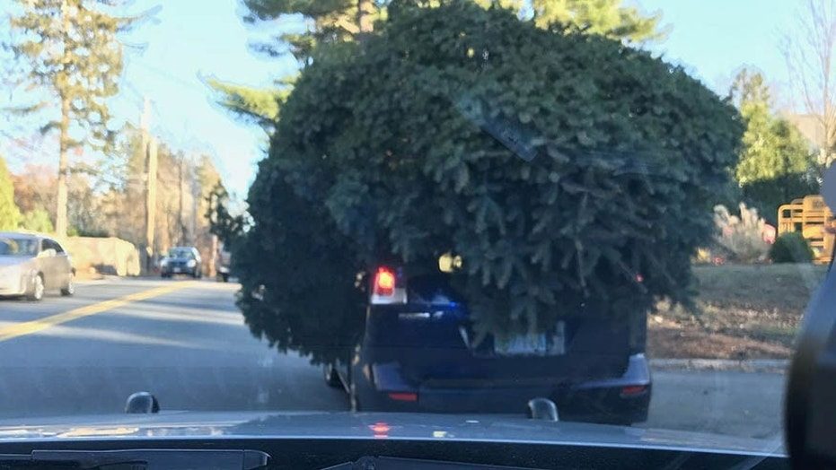 Massachusetts Police Stop Car With Massive Christmas Tree