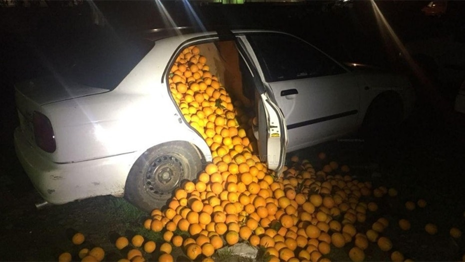 Police in Seville, Spain found 9,000 pounds of stolen oranges stuffed into three vehicle.
