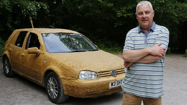 """A chauffeur got so fed up with driving luxury vehicles that he bought himself this £200 runaround - and covered it in FUR. Justin Scrutton (pictured), the owner of a chauffeur company, bought the wrecked old Volkswagen Golf because he fancied driving something that he didn't mind if his two dogs ruined. See National News story NNCAR; But the 46-year-old decided to go one step further and spent a barmy £180 covering the ancient Golf in ten metres of teddy-bear fabric. Justin, from Dartford, Kent said: """"I was trying to sleep one night and for some crazy reason I thought 'why not?'"""