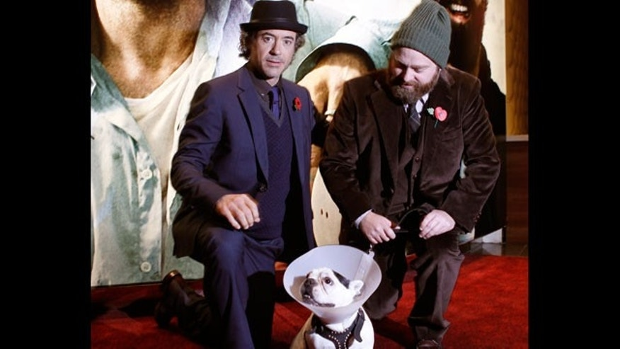 Nov. 2: Robert Downey Jr, left, Zach Galifianakis and Balu the dog arrive for the European premiere of Due Date at a central London cinema.