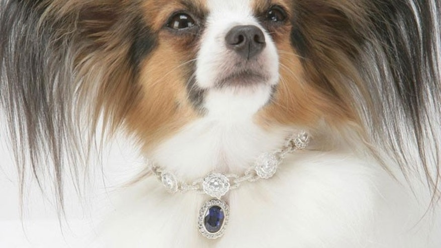 A certain European royal is a big fan of fancy bling, like the Amour de la Mer, for their pup.